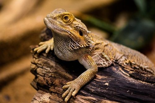 The Thermoregulation Mechanism of cold-blooded animals