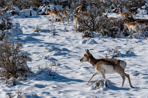 Physical And Behavioral Adaptations That Help Deers Stay Warm